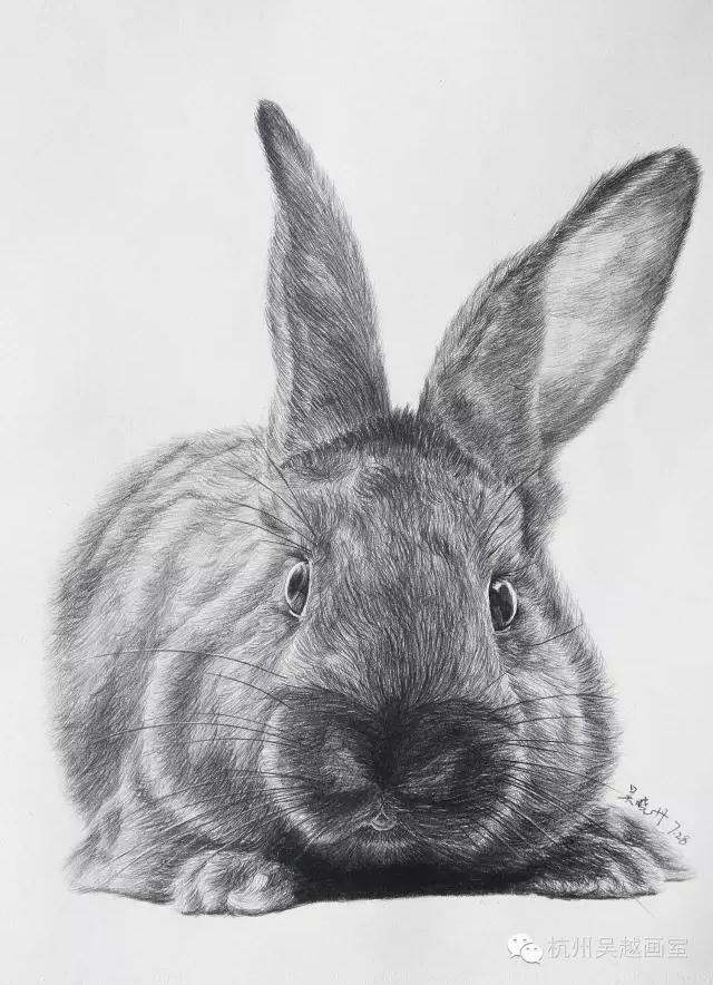 素描动物 可爱兔子